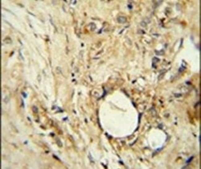 ITIH5 Rabbit anti-Human, Polyclonal, Invitrogen 400 µL; Unconjugated