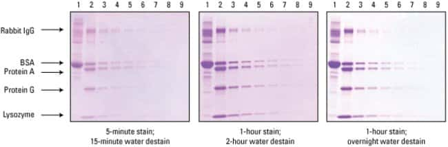 Thermo Scientific™ Imperial™ Protein Stain: Electrophoresis Reagents Electrophoresis