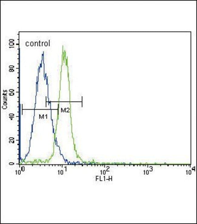 JAK2 Rabbit anti-Human, Mouse, Polyclonal, Invitrogen 400 µL; Unconjugated