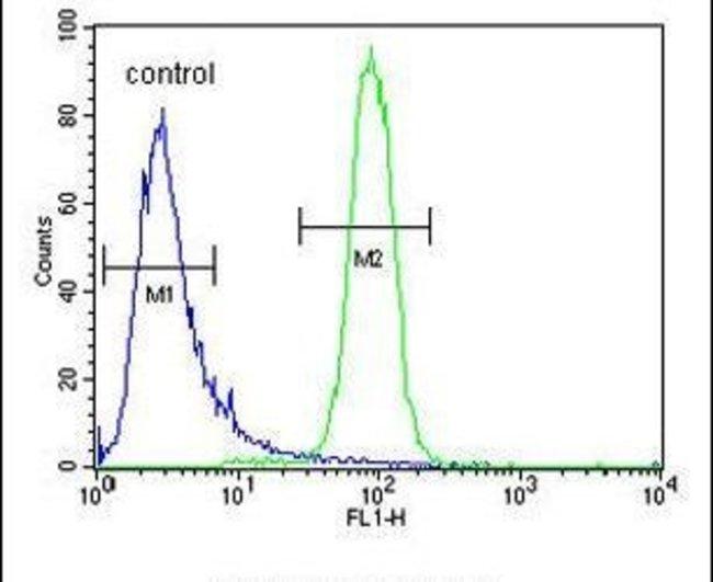 KBTBD5 Rabbit anti-Human, Polyclonal, Invitrogen 400 µL; Unconjugated
