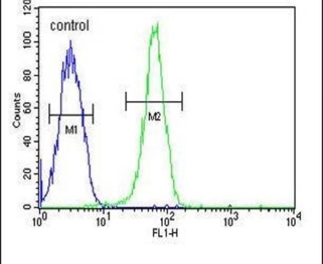KIF24 Rabbit anti-Human, Mouse, Polyclonal, Invitrogen 400 µL; Unconjugated