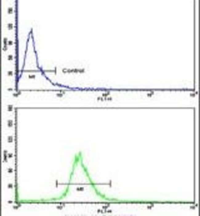 KIF3C Rabbit anti-Human, Polyclonal, Invitrogen 400 µL; Unconjugated