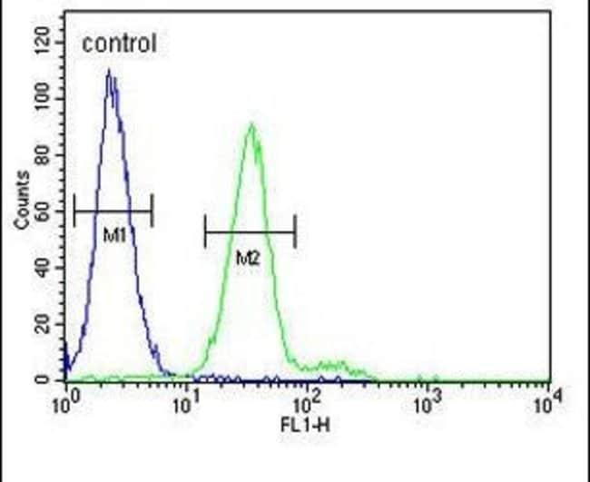 c-Kit Rabbit anti-Human, Mouse, Polyclonal, Invitrogen 400 µL; Unconjugated