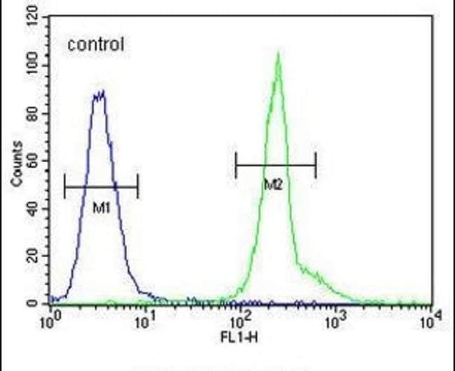 PRPSAP1 Rabbit anti-Human, Polyclonal, Invitrogen 400 µL; Unconjugated