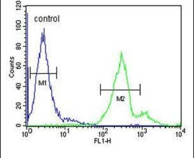 LAPTM5 Rabbit anti-Human, Polyclonal, Invitrogen 400 µL; Unconjugated