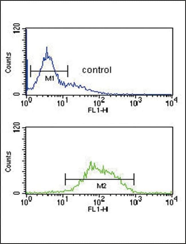 LCAT Rabbit anti-Human, Polyclonal, Invitrogen 400 µL; Unconjugated