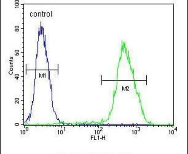 LMO4 Rabbit anti-Human, Mouse, Polyclonal, Invitrogen 400 µL; Unconjugated