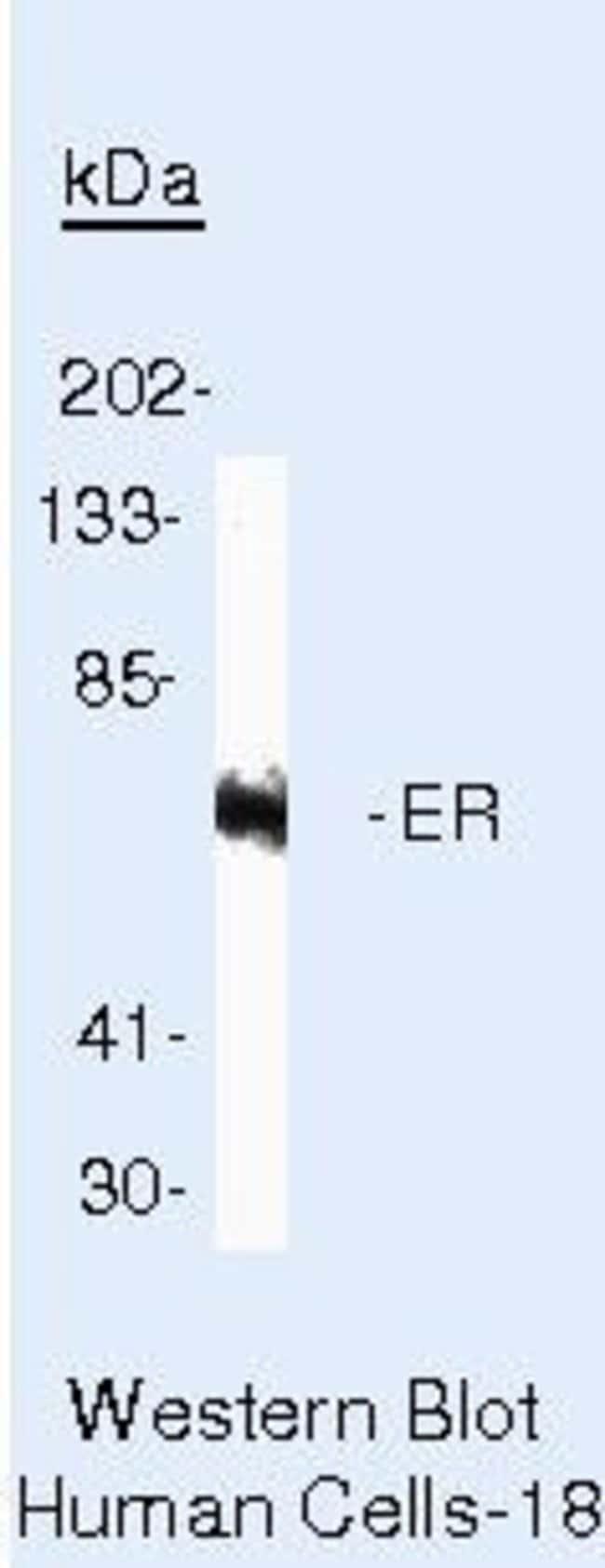Estrogen Receptor alpha Mouse anti-Human, Clone: 1D5, Invitrogen™ 500 μL; Unconjugated Primary Antibodies Er to Ez