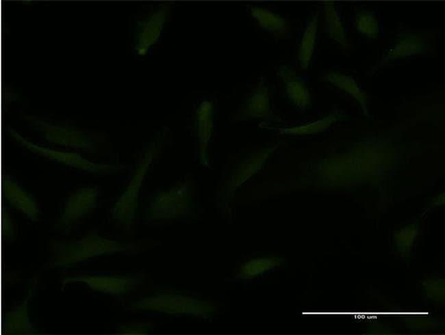 EMX2 Mouse anti-Human, Clone: 4D8, Invitrogen 100 µg; Unconjugated