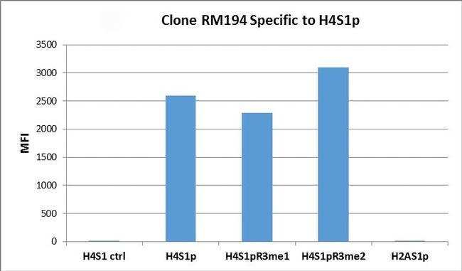 Phospho-Histone H4 (Ser1) Rabbit anti-Human, Invitrogen 100 µg; Unconjugated