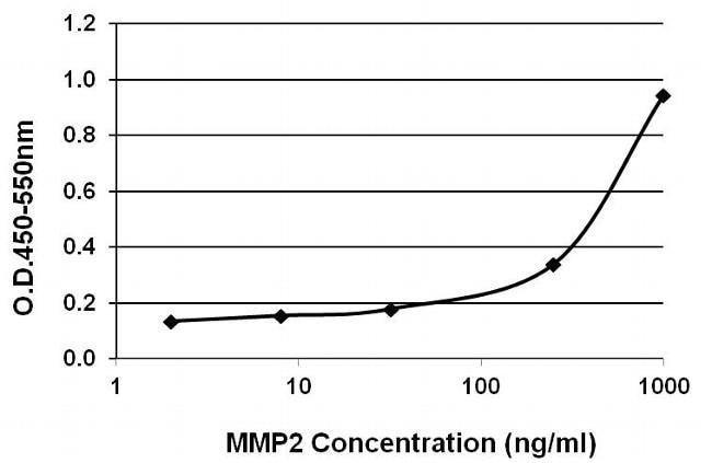 MMP2 Mouse anti-Human, Rat, Clone: F14 P4 D3, Invitrogen 100 µg; Unconjugated