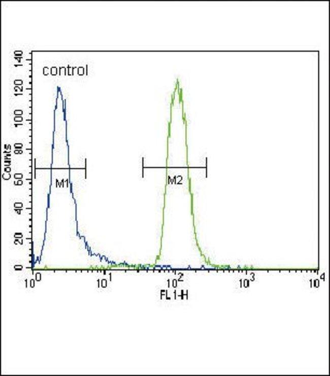 MUSK Rabbit anti-Human, Polyclonal, Invitrogen 400 µL; Unconjugated