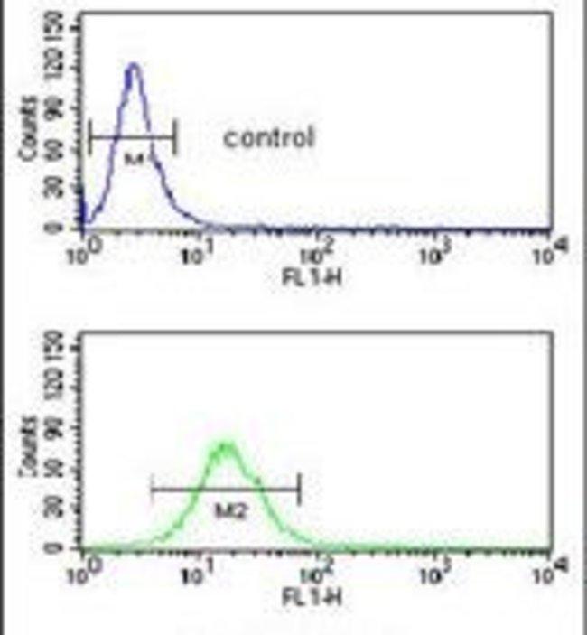 NEDD4 Rabbit anti-Human, Mouse, Polyclonal, Invitrogen 400 µL; Unconjugated