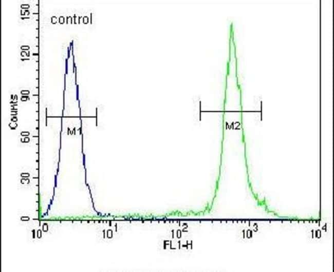 Nkx2.1 Rabbit anti-Human, Polyclonal, Invitrogen 400 µL; Unconjugated