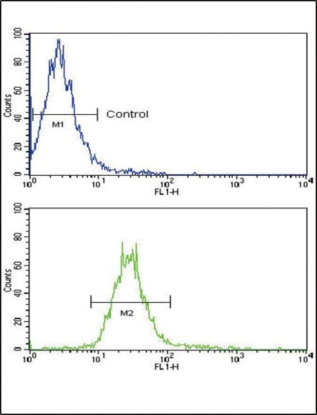 NRG1 Rabbit anti-Human, Polyclonal, Invitrogen 400 µL; Unconjugated