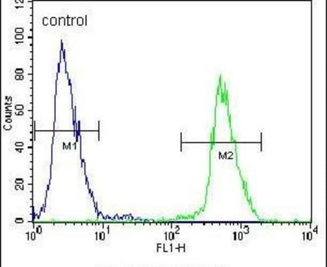 gp210 Rabbit anti-Human, Polyclonal, Invitrogen 400 µL; Unconjugated