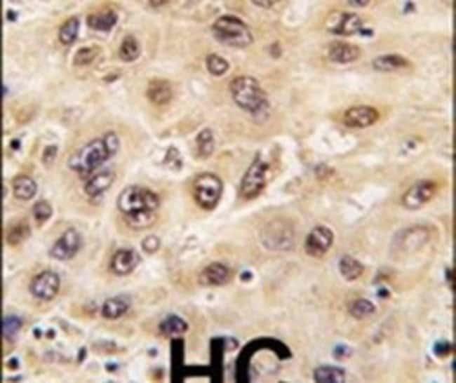 Nucleostemin Rabbit anti-Human, Polyclonal, Invitrogen 400 µL; Unconjugated