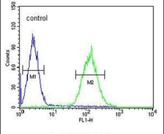 POU5F1B Rabbit anti-Human, Polyclonal, Invitrogen 400 µL; Unconjugated