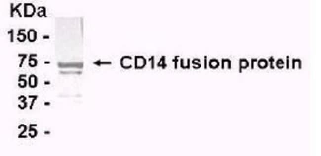 CD14 Chicken anti-Human, Polyclonal, Invitrogen 50 µg; Unconjugated