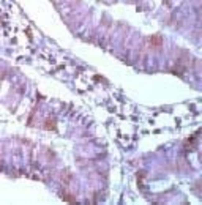 MCL1, Polyclonal, Invitrogen 7mL; Unconjugated