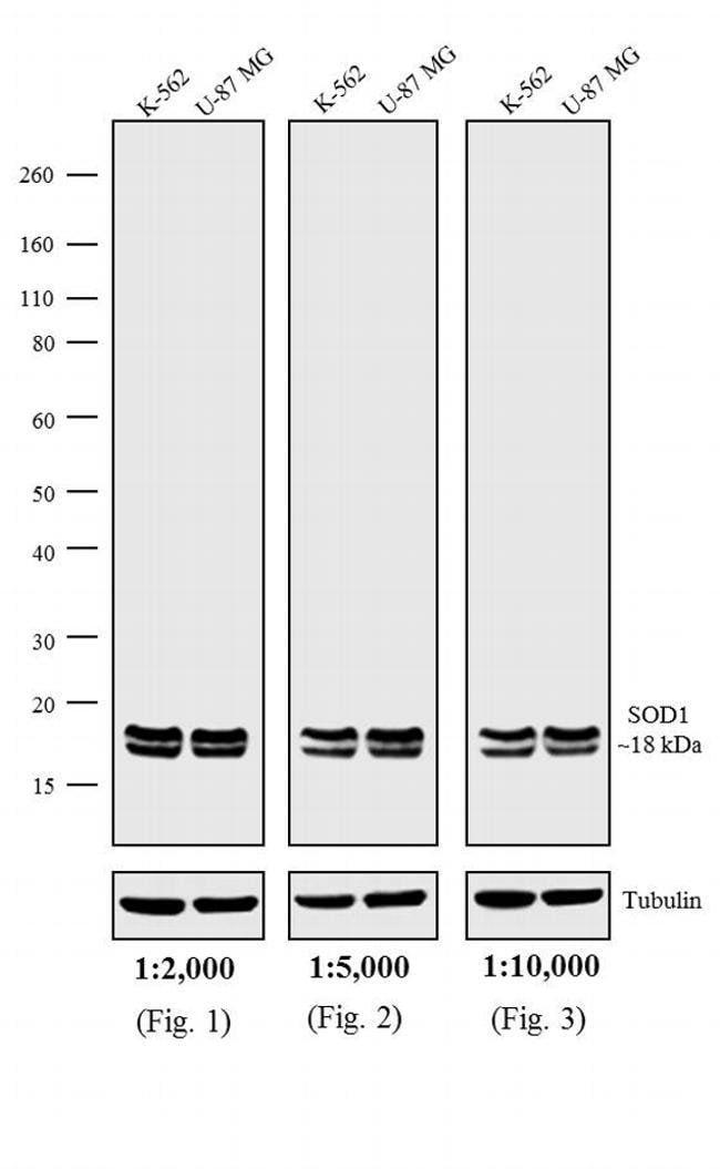 IgG (H+L) Rabbit anti-Mouse, Biotin, Invitrogen 1 mg; Biotin:Life Sciences