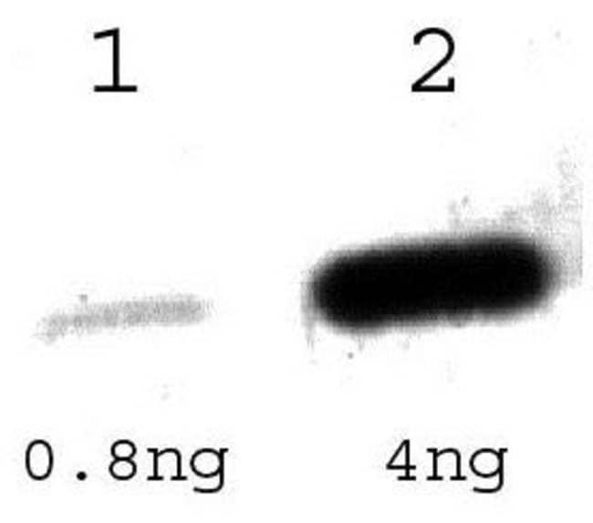 Tet Repressor Rabbit anti-Bacteria, Polyclonal, Invitrogen 100 µL;