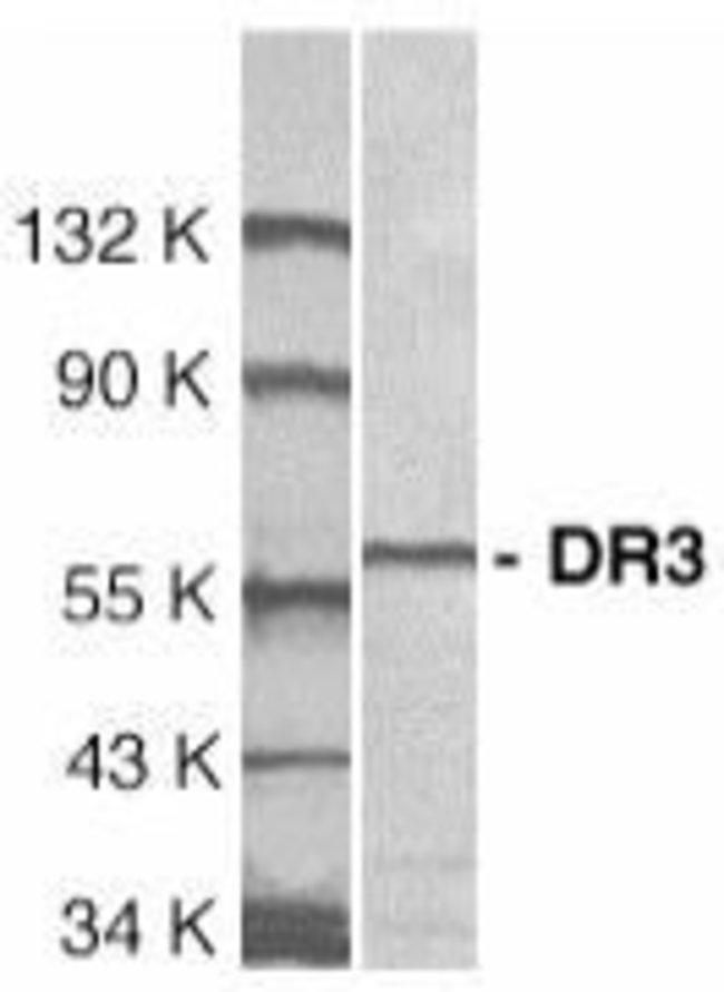 DR3 Rabbit anti-Human, Polyclonal, Invitrogen 100 µg; Unconjugated