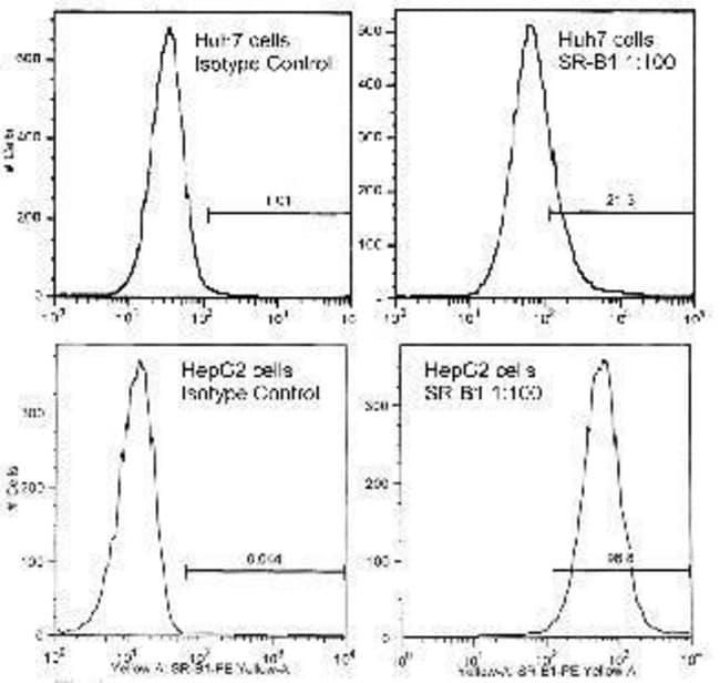 SR-BI Rabbit anti-Human, Mouse, Rat, Polyclonal, Invitrogen 100 µL;