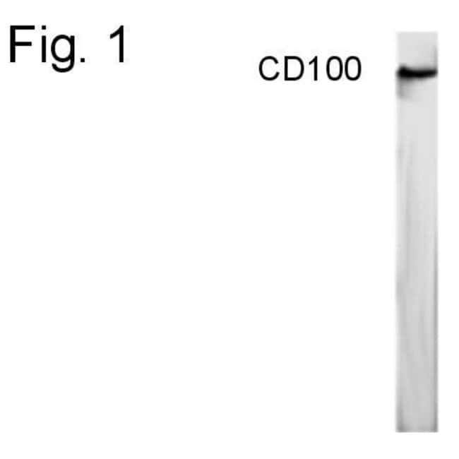 CD100 Rabbit anti-Human, Polyclonal, Invitrogen 100 µg; Unconjugated