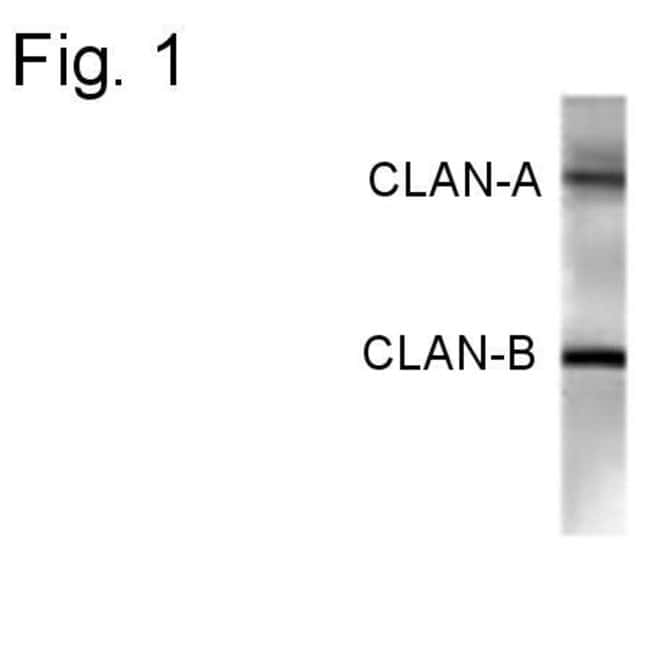 NLRC4 Rabbit anti-Human, Polyclonal, Invitrogen 100 µg; Unconjugated