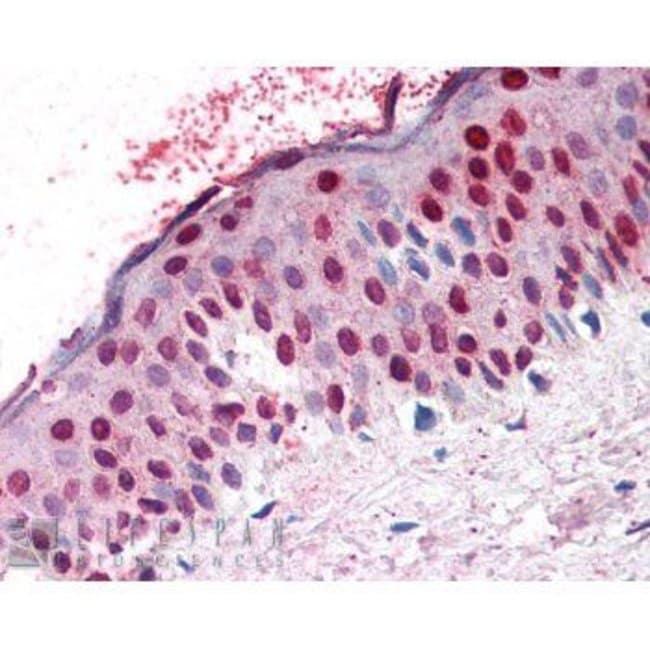 RANGAP1 Rabbit anti-Human, Xenopus laevis, Polyclonal, Invitrogen 100 µL;