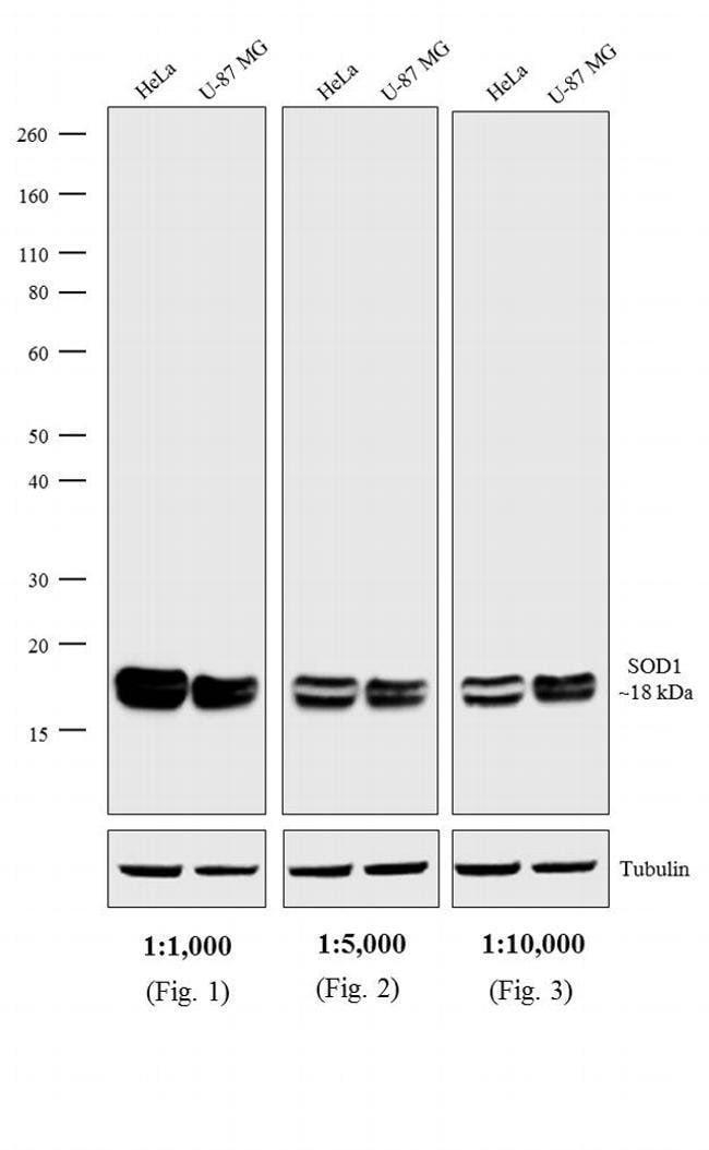 IgG, IgM, IgA (H+L) Goat anti-Mouse, HRP, Invitrogen 1 mg; HRP:Life Sciences