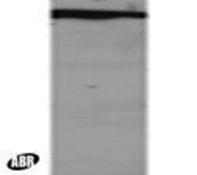 DDB1 Goat anti-Human, Mouse, Polyclonal, Invitrogen 100 μg; Unconjugated:Antibodies