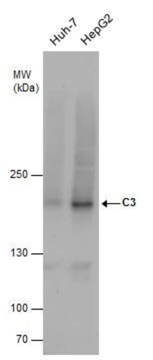 Complement C3 Rabbit anti-Human, Mouse, Polyclonal, Invitrogen 100 µL;