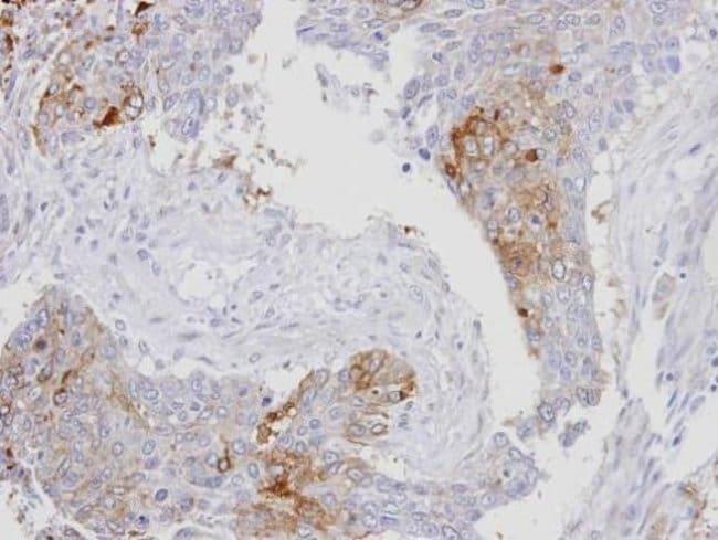 RanBP16 Rabbit anti-Human, Polyclonal, Invitrogen 100 µL; Unconjugated