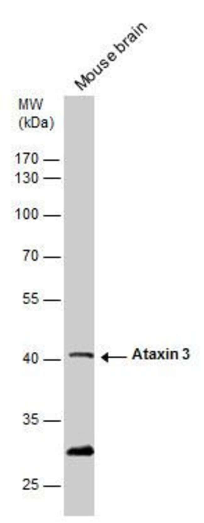 Ataxin 3 Rabbit anti-Human, Mouse, Polyclonal, Invitrogen 100 µL;