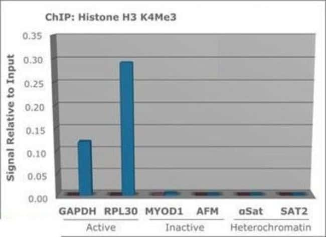 Tri-Methyl-Histone H3 (Lys4) Rabbit anti-C. elegans, Human, Mouse, Polyclonal,