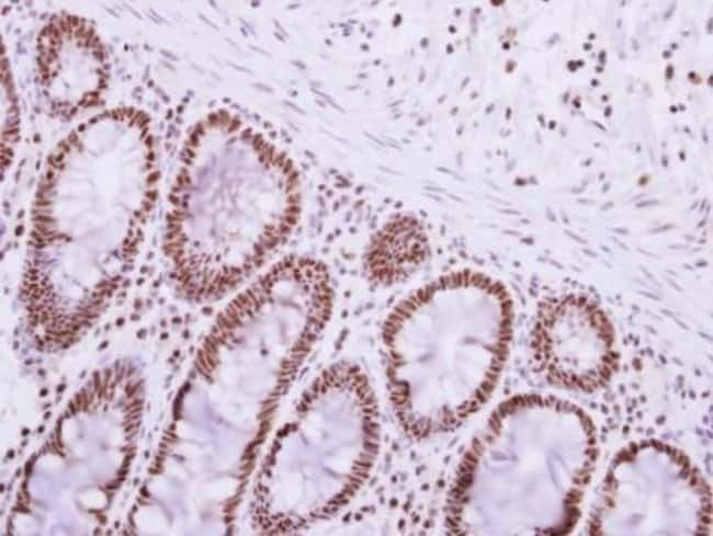 PABPN1 Rabbit anti-Human, Mouse, Polyclonal, Invitrogen 100 µL; Unconjugated