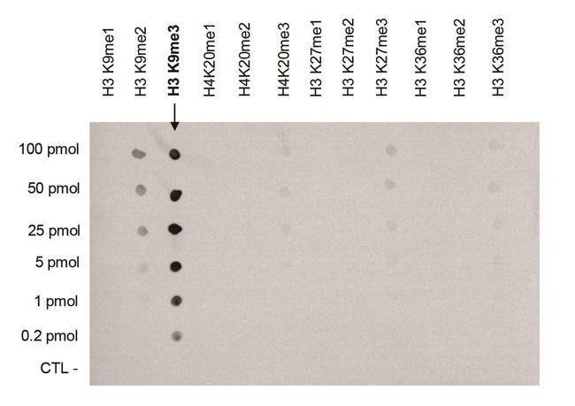Tri-Methyl-Histone H3 (Lys9) Rabbit anti-Human, Mouse, Polyclonal, Invitrogen