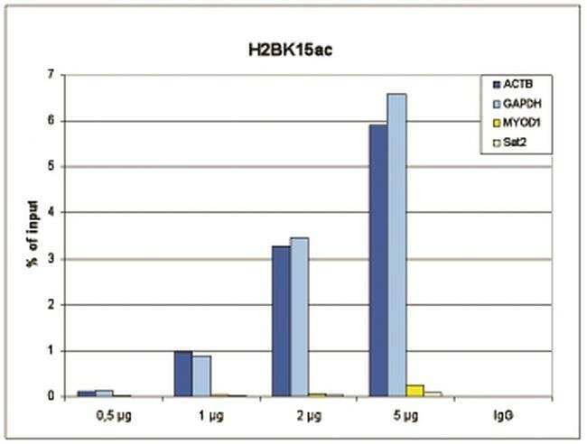 Acetyl-Histone H2B (Lys15) Rabbit anti-Human, Polyclonal, Invitrogen 50