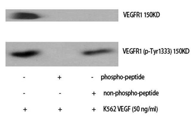 Phospho-VEGF Receptor 1 (Tyr1333) Rabbit anti-Human, Polyclonal, Invitrogen