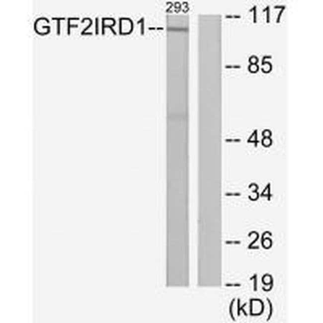 GTF2IRD1 Rabbit anti-Human, Mouse, Rat, Polyclonal, Invitrogen 100 µL;