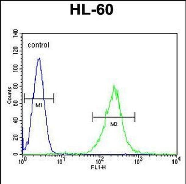 ECAT1 Rabbit anti-Human, Polyclonal, Invitrogen 400 µL; Unconjugated