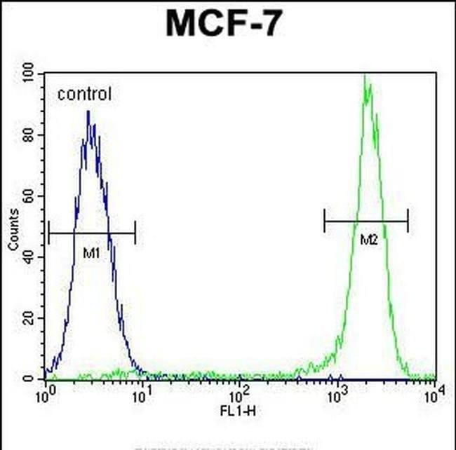 KSR2 Rabbit anti-Human, Polyclonal, Invitrogen 400 µL; Unconjugated