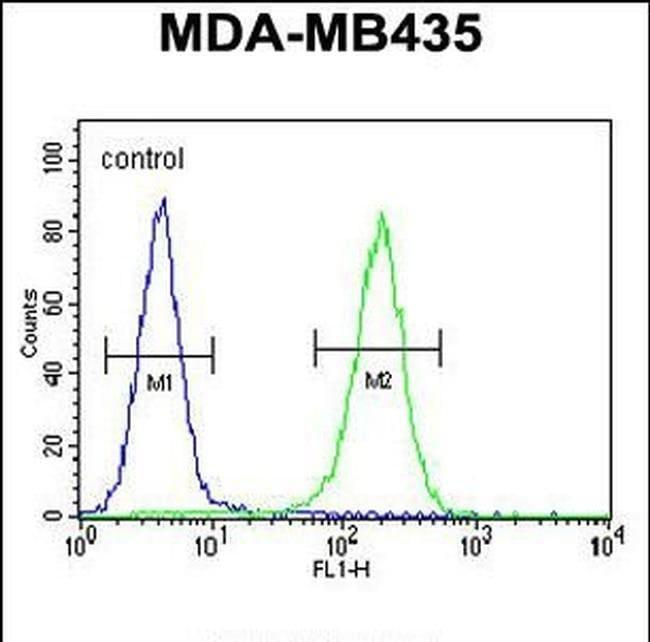 TTLL13 Rabbit anti-Human, Polyclonal, Invitrogen 400 µL; Unconjugated