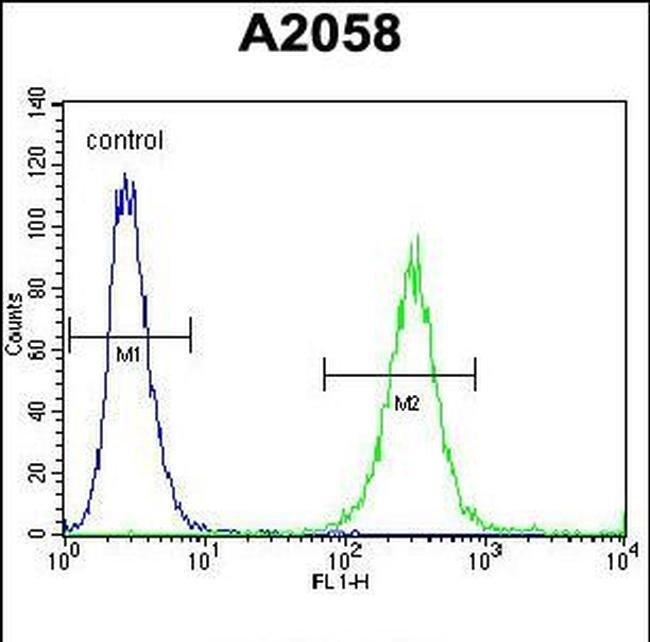 GAB4 Rabbit anti-Human, Polyclonal, Invitrogen 400 µL; Unconjugated
