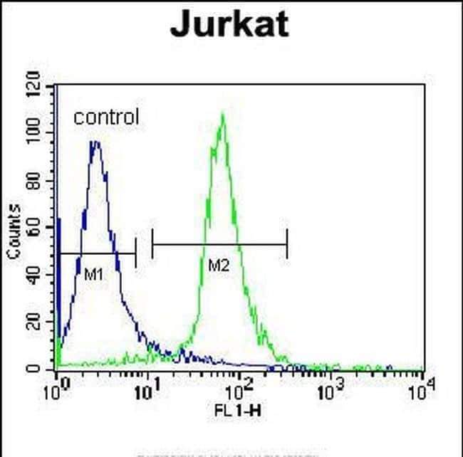 RBM14 Rabbit anti-Human, Polyclonal, Invitrogen 400 µL; Unconjugated