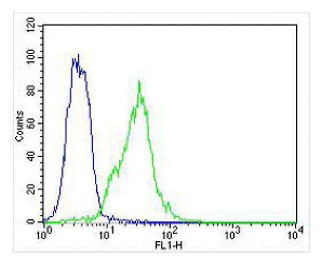 HBB Rabbit anti-Human, Polyclonal, Invitrogen 400 µL; Unconjugated