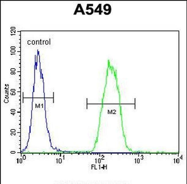 SNX24 Rabbit anti-Human, Mouse, Polyclonal, Invitrogen 400 µL; Unconjugated