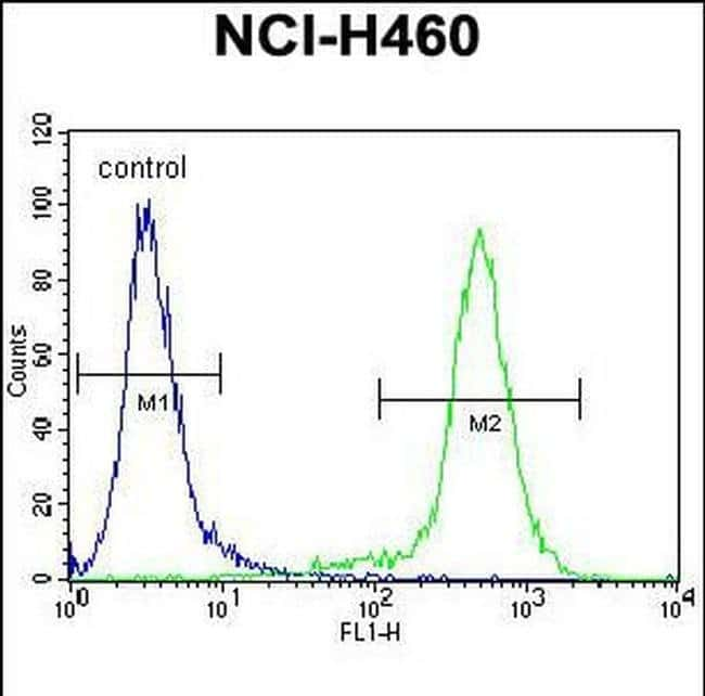 LCN9 Rabbit anti-Human, Polyclonal, Invitrogen 400 µL; Unconjugated
